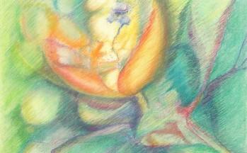 z.t. pastelkrijt op papier, 50 x 65 cm